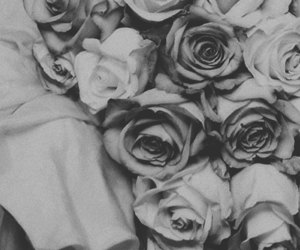 beautiful, vintage, and rose image
