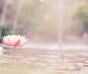 flower, nature, and pastel image