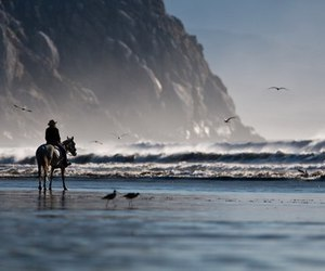 freedom, horse, and sea image