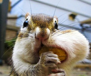 cute, squirrel, and animal image