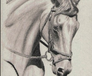 beautiful, drawing, and horse image