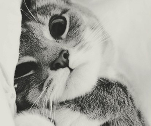 cat, wallpaper, and white image