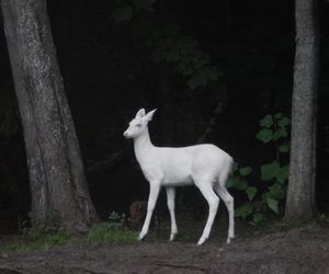 deer, animal, and white image