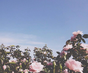 flowers, soft grunge, and blue image