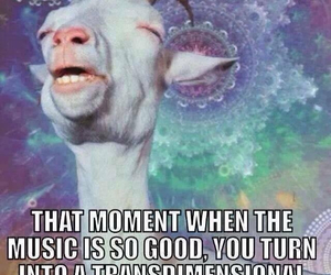 music, goat, and funny image