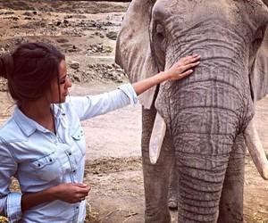 girl, elephant, and luxury image