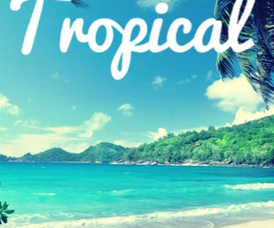 background, beach, and tropical image