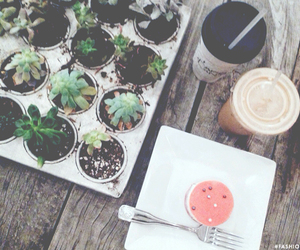 cactus, coffee, and fashionlush image