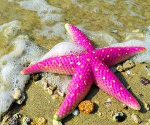 pink, starfish, and sea image