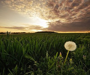 beauty, dandelion, and life image