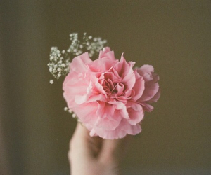 flower and carnation image