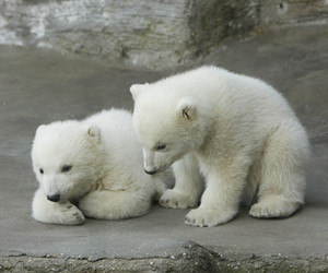 cute, adorable, and bear image