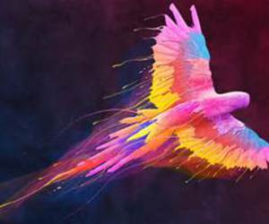 bird, colors, and art image