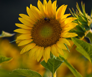 flower, helios, and explored image