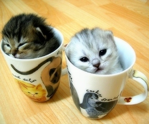 cats, cups, and cute image