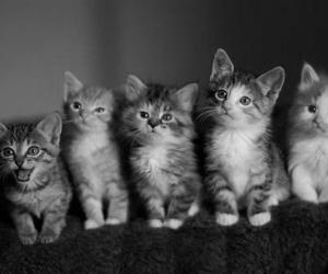 black and white, cats, and cute image
