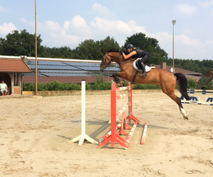 equestrian, horse, and jumping image
