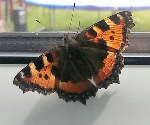 beautiful, butterfly, and insect image