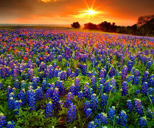 beautiful, flowers, and landscapes image