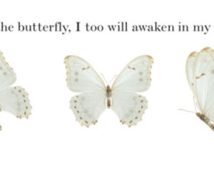 butterfly, vintage, and quote image