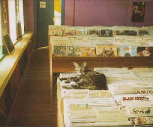 cat and record image