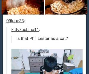 cat, popcorn, and tumblr image