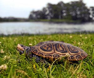 maryland, reptile, and dnr image