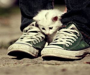 cat, converse, and kitten image