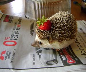 hedgehog, cute, and strawberry image