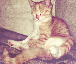 budha, cat, and chilling image