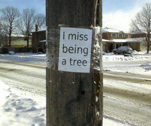 tree, funny, and text image