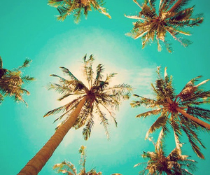 palmtrees, summer, and sun image