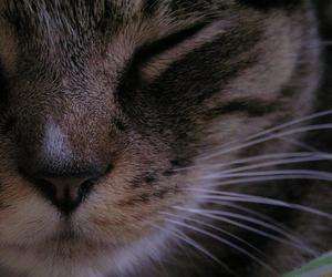 animal, cat, and sleepy image