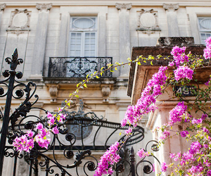 flowers, house, and paris image