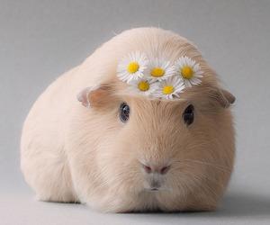 animal, cute, and daisy image