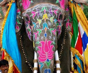 animal, colors, and elephant image