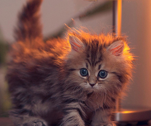 adorable, ears, and lamp image