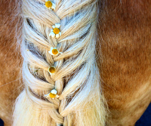 braid, daisies, and horse image