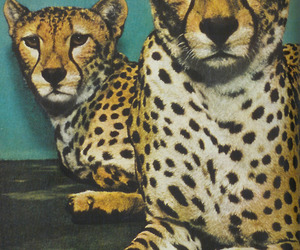 animal, cheetah, and leopard image