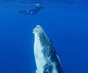 blue, deep ocean, and swimming image