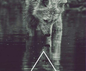 wolf, hipster, and water image