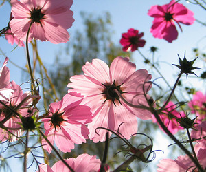 backlight, flower, and nature image