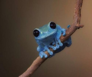 frog, blue, and animal image