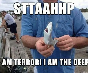 shark, funny, and cute image