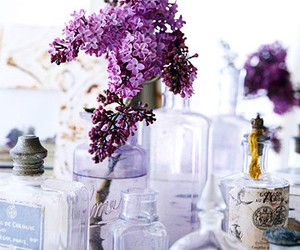 lilacs and violet image
