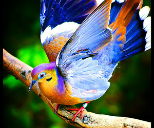 bird, dove, and wings image