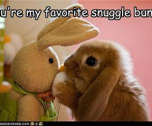 awwwww and bunny image