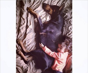 black, doberman, and dog image