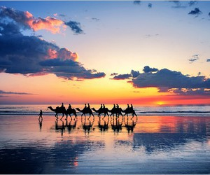 camels and sunset image