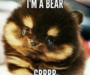 bear, teddy bear, and grrrr image